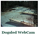 Dog Sled Web Cam (only available in winter months)